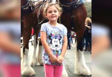 Dad Snaps A Photo Of His Little Girl And Gets Photobombed By Smiling Clydesdale