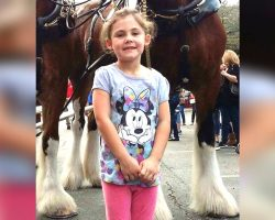 Dad Snaps A Photo Of His Little Girl, Gets Photobombed By Smiling Clydesdale