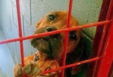 Dog Cried All Night As No One Picks Her & Shelter Shared Her Photo As A Last Resort