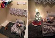 Dog-Mom Turns Closet Into Cozy A Bedroom For Her Spoiled Senior Chihuahua