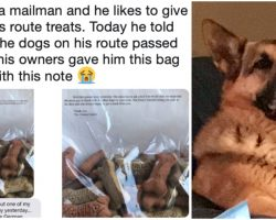 "Mailman Gave Treats To Dogs On His Route, And When One Died, Owners Gave Him A ""Sweet Note"""
