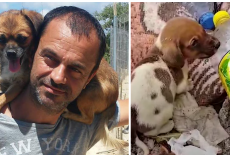 Man Gives Up Everything He Owns To Save Stray Dogs