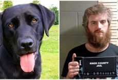 Repulsive Man Sexually Assaults Dog & Films It, Pays Small Fine & Avoids Jail Time