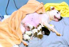 Owner Throws Dog Out Of Car As She's Giving Birth, 5 Pups Die & Mama Dog Critical
