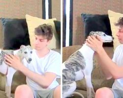 Owners Hoped For The Best And Go On Vacation, Returned & Found Dog Sitter's Video