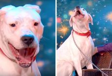 Pit Bull Enchants Audience With A Powerful Rendition Of Whitney Houston Song