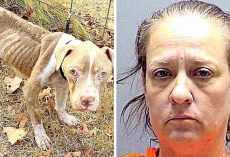 Repeat Offender Starves 11 Dogs To Brink Of Death, Had Previously Abused 84 Dogs