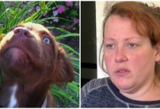 Sadistic Woman Beat Her Service Dog To Death With A Hammer & Felt No Remorse