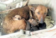 Woman Hears Crying And Finds Newborn Human Baby Tucked In Between Litter Of Stray's Pups