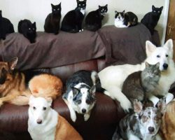 Woman Manages To Get Her 17 Pets To Sit Still And Look At The Camera For A Photo
