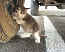 Scared Kitten Could Only Hug A Truck Tire In This Lonely World