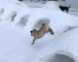 Man Creates Elaborate Backyard Snow Tunnels For His Three Dogs