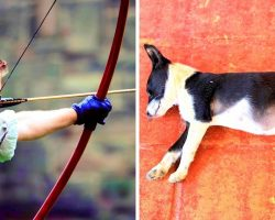 Owner Uses Puppy For Target Practice With Arrows, Puppy Dies Of Critical Injuries