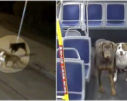 Bus Driver Spots Lost Dogs In The Cold, Gets Them Home In Time For Christmas