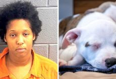 Vengeful Woman Kidnaps & Hangs Ex-Boyfriend's Puppy To Death To Get Back At Him