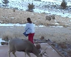 Woman Goes Out To Feed The Deer Every Day, And They Swarm From All Over