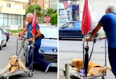 Devoted Dad Won't Let Arthritis Depress Senior Dog, Takes Him On Walk Every Day