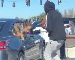 Man Gets Out Of Car At Stoplight To Introduce His Puppy To A Curious Dog