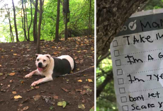 Dog Walker Comes Across Gentle Pit Bull Tied To A Tree With A Note Attached