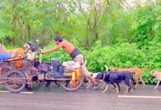 Selfless Man Drags Cart Along Borders For 6 Years, Rescues Over 500 Homeless Dogs