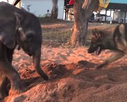 Baby Elephant Is Rejected By The Herd, Finds Companionship In A Friendly Pup