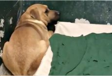 Family Dumps Their Dog At A Kill Shelter For Eating Out Of The Garbage Can