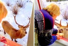 Lonely Elderly Widow Feeds Friendly Stag, Gets Bombarded With Hate Comments Online