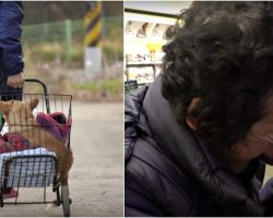 Poor Woman Takes In Paralyzed Dog No One Wants Then Has To Let Him Go