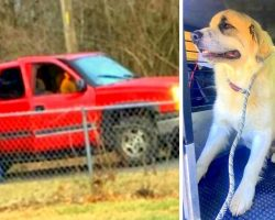 Men Dump Dog In A Deserted Spot & Drive Off, Confused Dog Cries In Fear All Alone