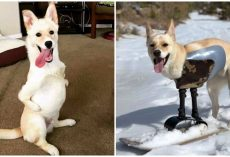 'Kangaroo' Dog With 2 Legs Hits The Slopes, Proves Disability Won't Slow Him Down