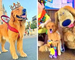Service Dog Enjoys A Day Out In Animal Kingdom & Meets His Favorite Disney Hero
