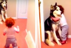 "Dog Protecting His Sister From ""Vacuum Monster"" Shows Why Every Baby Needs A Dog"