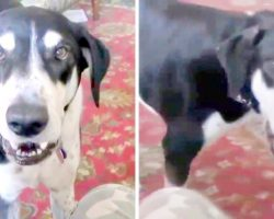 Impatient Dog Realizes He Can Talk, And The First Thing He Asks For Is A Kitten