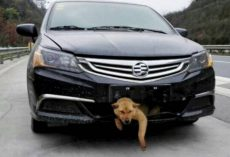 Man Hears Barking Coming From Front Bumper 200 Miles Into His Trip