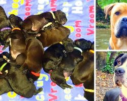 Dog Was Supposed To Give Birth To 7 Puppies, Births A World Record 21 Puppies