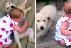 "Mom Was ""Warned"" Not To Let Pup Near The Baby And She Did It Anyway"
