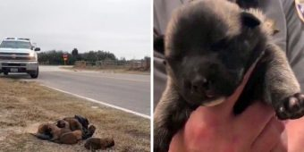 Monsters Threw Eight Newborn Puppies Out Of Car Window