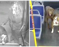 "Bus Driver Spots 2 Lost Dogs In Freezing Cold, Tells Them ""Hop On My Bus"""