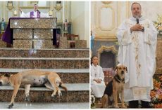 A Priest Brings Stray Dogs Into Mass So They Can Find New Families