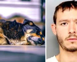 "Man Viciously Stabs Dog To Death Because The Dog Wouldn't ""Get Along"" With Him"