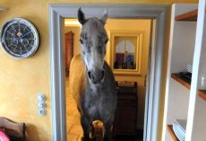 Horse Strolls Into Random Man's House And Makes Herself Right At Home