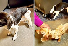 Owner Starves Dogs For Months & Dumps Them In A Parking Lot Before Thanksgiving
