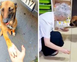 Injured Stray Dog Tracks Down A Pharmacist & Shows Her The Paw That Is Bleeding