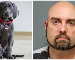 Man Beat Dog Til He Urinated, Repeatedly Shocked Him, & Tied His Snout Shut