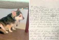 Woman Who Died Of Cancer, Left A Touching Note To Help Her Senior Dog Get Adopted