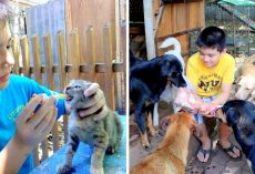 9-Year-Old Uses Up Pocket Money To Feed Homeless Dogs, Now Opens A No-Kill Shelter