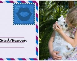 A Letter To My Puppy In Heaven