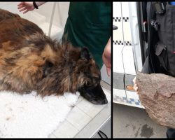 Bella In Critical Condition After Owners Tied Rock To Her & Threw Her In River