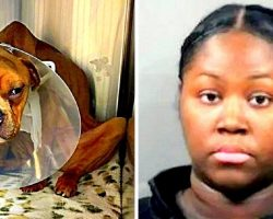 Vile Woman Deliberately Starves Dog For Months, Buries Him In A Dumpster To Die