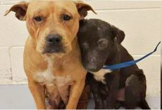 Unloved & Unwanted Pit Bulls Cling To One Another For Comfort